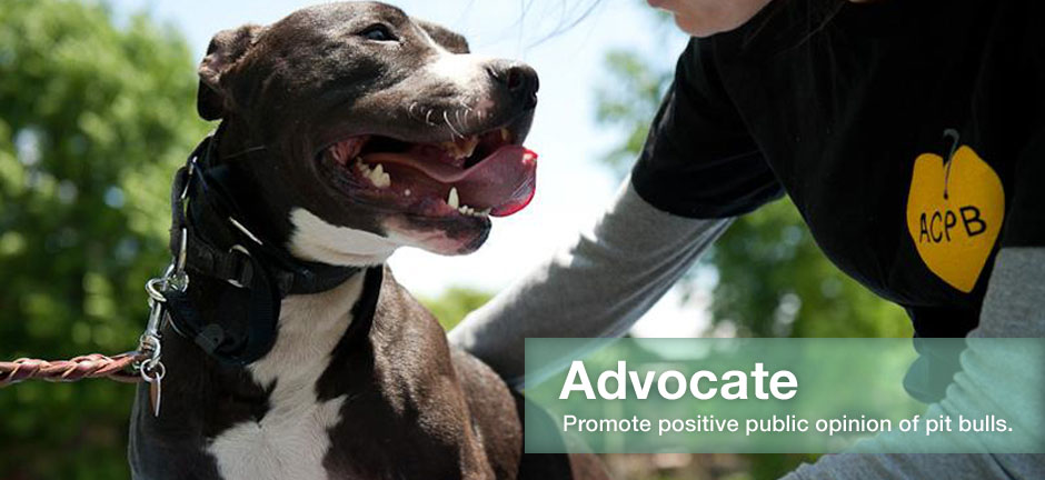 Angel City Pit Bulls Los Angeles Dog Rescue
